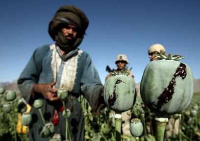 recolta opium