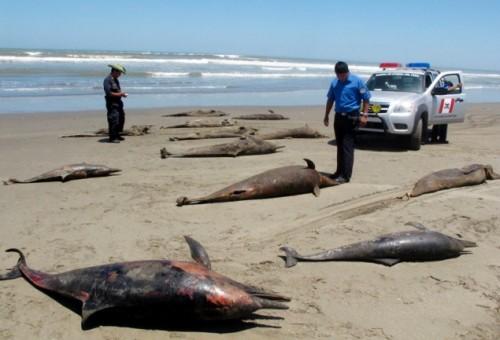 delfini-morti-peru