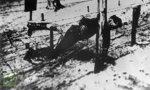 yakov stalin executat